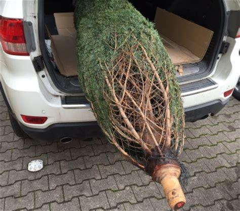wann schm ckt man den weihnachtsbaum wann stellt den weihnachtsbaum auf my