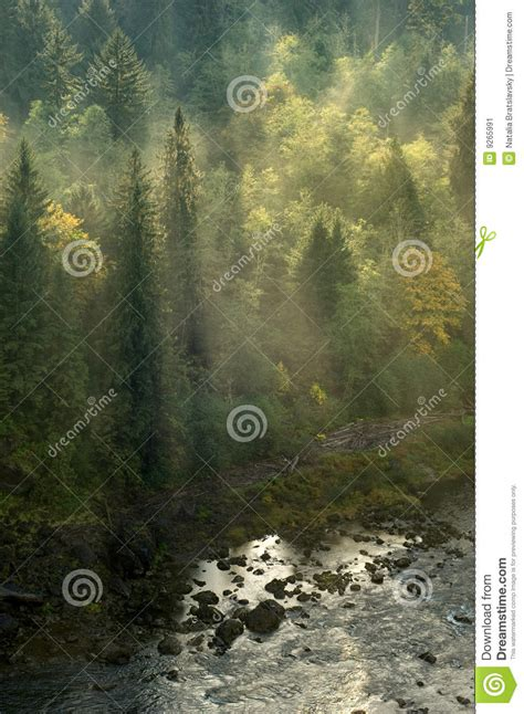 pacific northwest design royalty free stock photos image photo of a trail at salt creek recreation area in the
