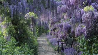 Flower Tree Pictures - bench under flowering trees wallpaper 17046