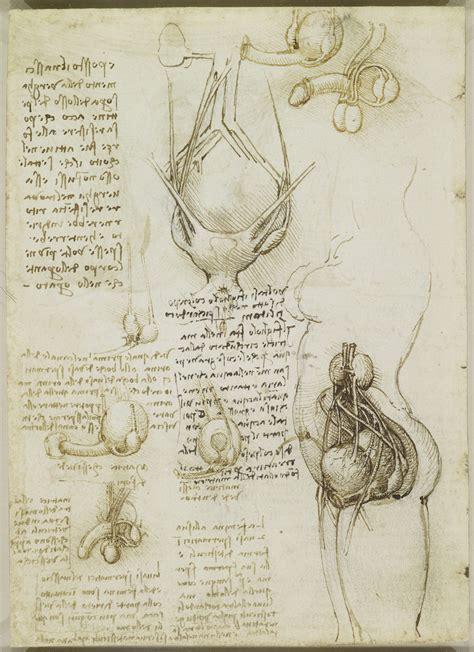 body maps leonardo da vinci s anatomical drawings flashbak
