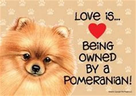 pomeranian quotes 1000 images about quotes on snow white quotes pomeranians and snow white