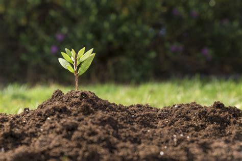 Hidrogel Beautiful Soil Plant plant soil vectors photos and psd files free