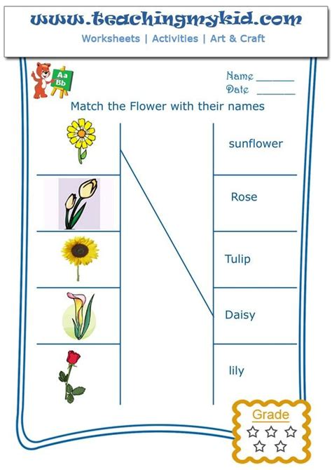 printable worksheets about flowers printable kindergarten worksheets match flowers with