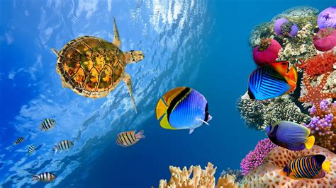 ultra hd underwater landscape  ultra hd wallpaper