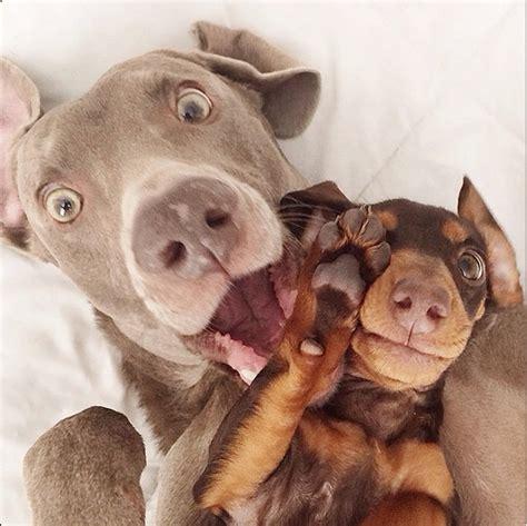 puppy friends best friend dogs