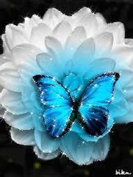 imagenes de mariposas reales mariposas reales on pinterest google mars and butterflies