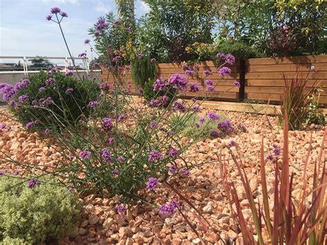 giardino roccioso mediterraneo isoni giardini i giardinieri di verona