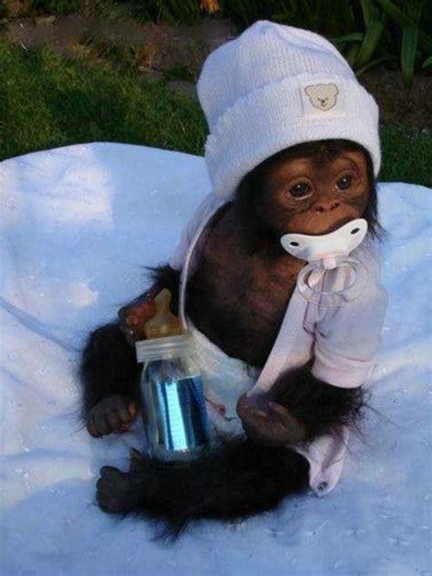 Wo Kann Baby Affen Kaufen 4725 by Ein Katalog Unendlich Vieler Ideen