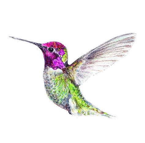17 best ideas about hummingbird drawing on pinterest how
