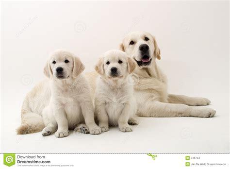 imagenes de la familia de animales perros de la familia imagenes de archivo imagen 416744