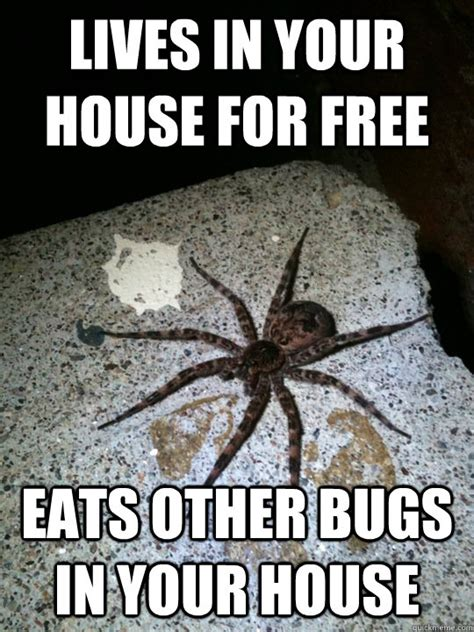 Spider In House Meme - lives in your house for free eats other bugs in your house