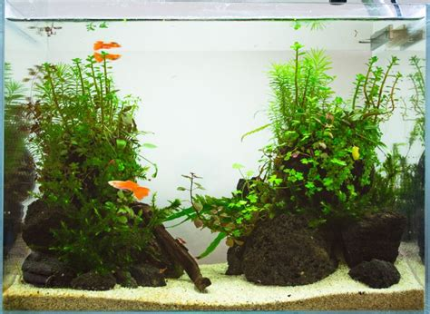 how to set up an aquascape the 20 minute 20l aquascape aka aquascaping for dummies