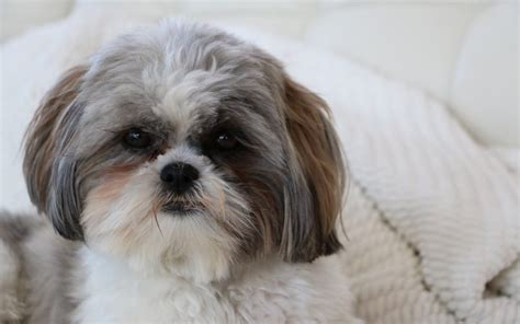 shih tzu vomiting and diarrhea causes of vomiting diarrhea in cats canna pet