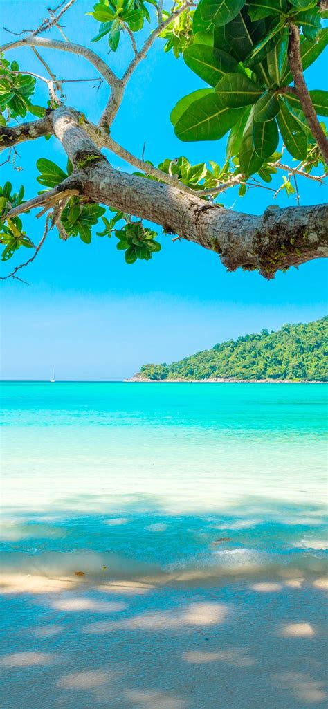 wallpaper beautiful sea beach tree tropical