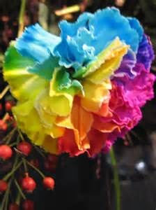 colored carnations carnation rainbow dyed ubloom