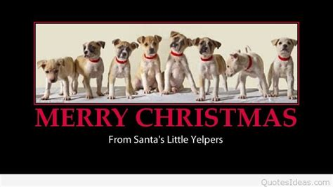 funny christmas  wishes quotes messages