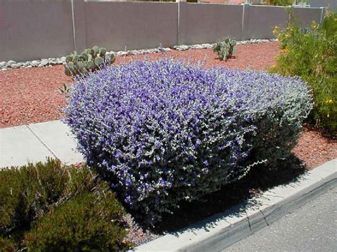 quantum landscaping nursery desert plants 2 2