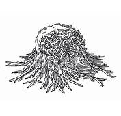 癌症细胞肿瘤宏绘图 Stock Vector  FreeImagescom