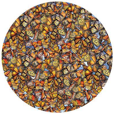 monarch frenzy  piece  jigsaw puzzle spilsbury