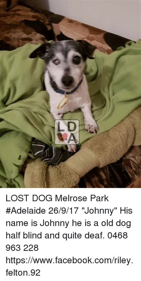 Lost Dog Meme - lost dog melrose park adelaide 26917 johnny his name is