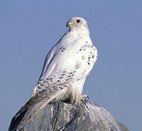 birds of the northwest territories bird canada