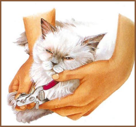 peut on couper les griffes des chats s occuper de chat