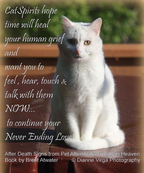 25 best ideas about cat memorial on pinterest