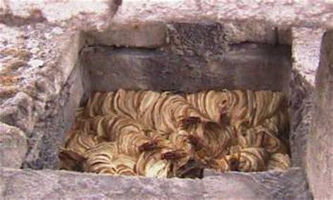 hornissennest im haus eichenspinner bek 228 mpfung ma 223 nahmen bei wespen und hornissen