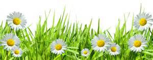 Deviantart more like grass with flowers png by hanabell1