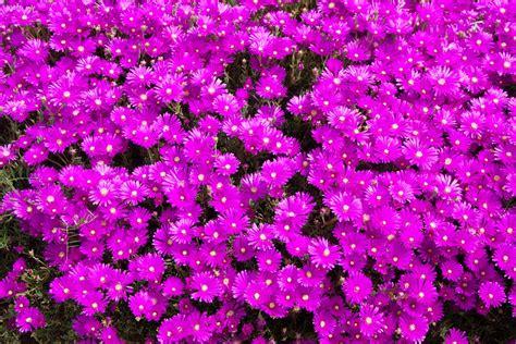 aiuole fiorite tutto l anno aiuole fiorite come crearle perfette per tutte le stagioni