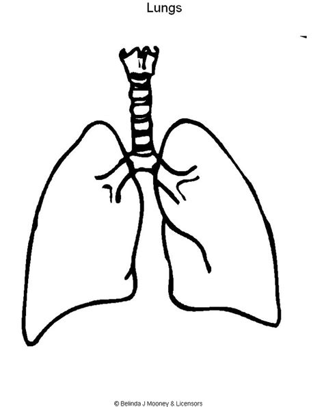 coloring pages of heart and lungs lungs coloring page printable picture of lungs