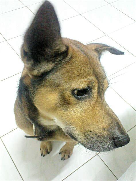 Anjing Lucu Imut foto anak anjing yang lucu dan imut terlengkap display