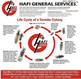 pest control services  karachi termite life cycle