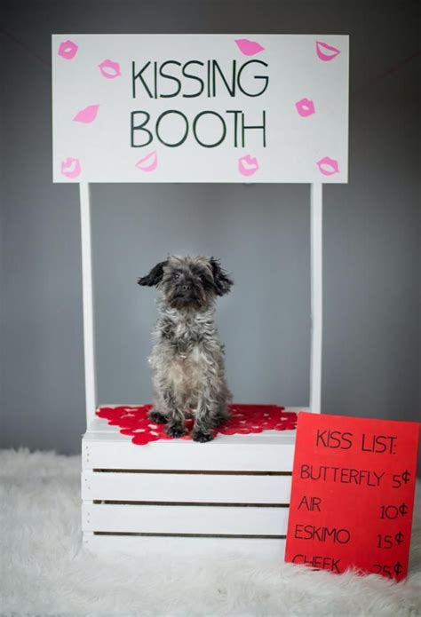 dogs in photo booth puppy in a booth classroom themes