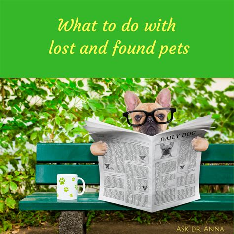 lost and found dogs what to do with lost and found pets ask dr guthrie pet hospital