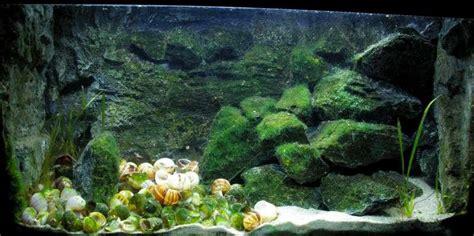 Aquarium 80 Cm By Arlicho a v ong tanganyika aquarium inrichten