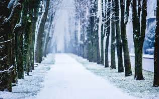 Winter snow trees alley wallpapers pictures photos images