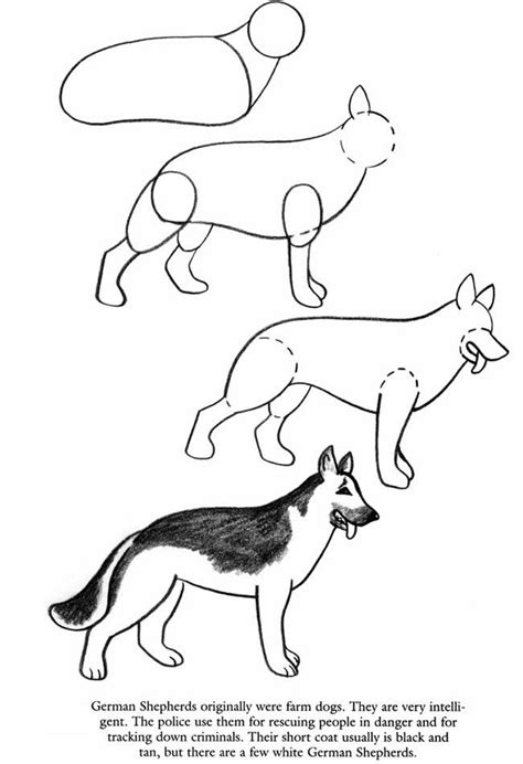 how to draw a german shepherd 17 best images about how to draw on how to draw dogs and school