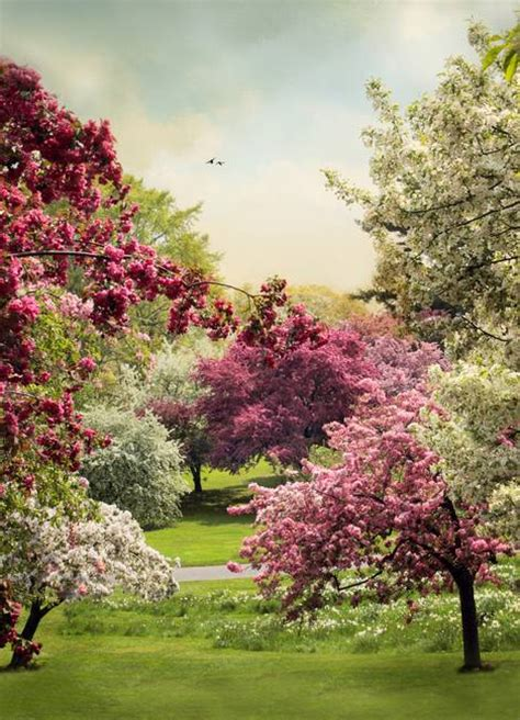 5 cherry tree grove stunning quot trees quot artwork for sale on prints