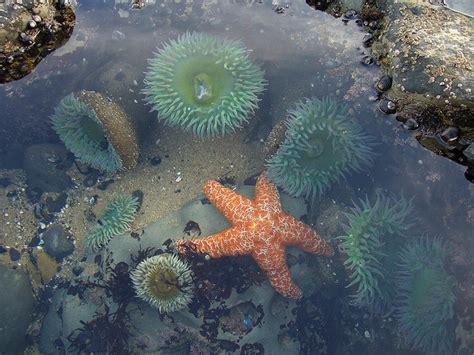 tide santa cruz best 25 tide pools ideas on pinterest vacation spots