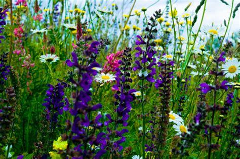 prato fiorito in inglese prato fiorito interpretato dal fotografo emilio tremolada