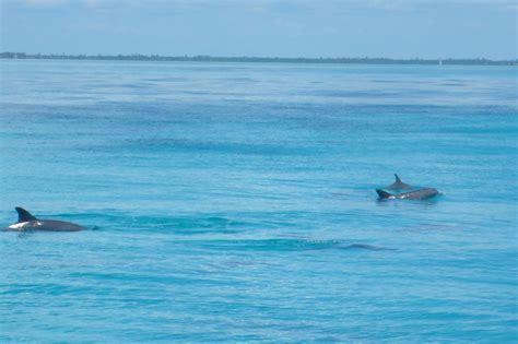 bagno con i delfini bagno con i delfini giriamoilmondo