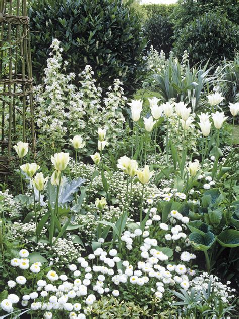 White Garden Flowers Whites Brighten Garden Hgtv