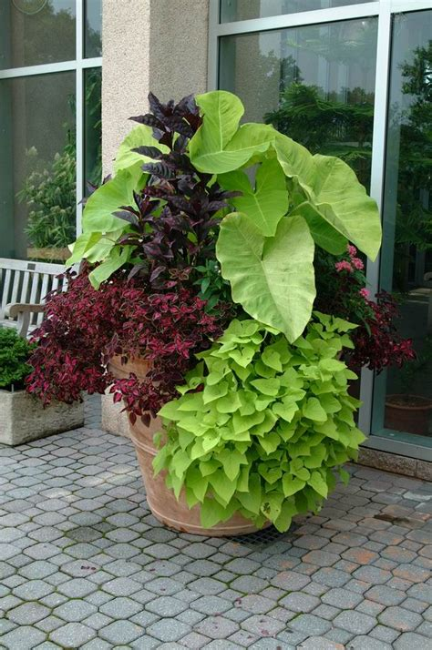 planters for container gardens crabapple landscapexperts success with container gardens