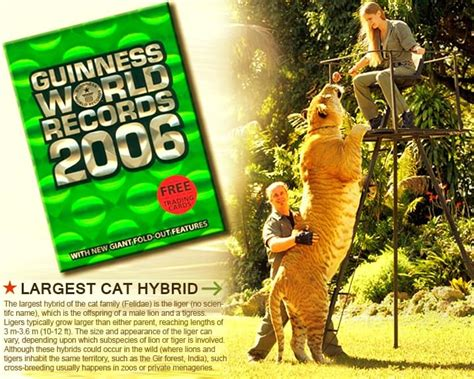 pictures of guinness book of world records liger hercules in guinness book of world records