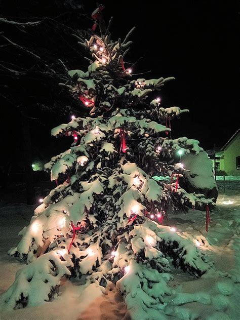 weihnachtsbaum selber schlagen berlin weihnachtsb 228 ume selberschlagen im bernauer stadtwald