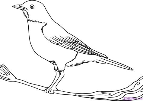 bird art drawing birds 1782212965 how to draw a robin step by step birds animals free online drawing tutorial added by dawn