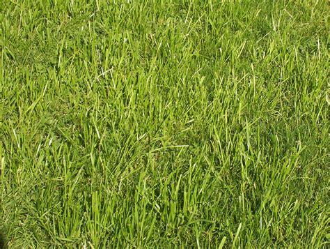 grass wiktionary