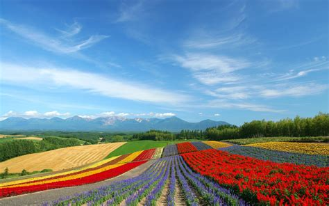 immagini paesaggi fioriti sfondo quot paesaggi ci fioriti quot 1920 x 1200 paesaggi