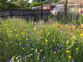 mixed perennial and wildflower meadow planting grow like